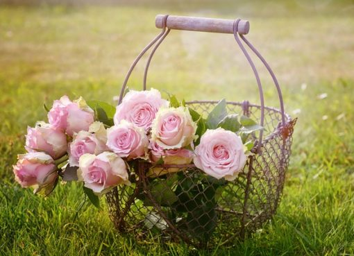 geles po stiklu, dovana, rozes